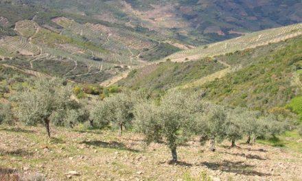 Agricultura abre el plazo para solicitar ayudas para conservar los cultivos en zonas de pendiente