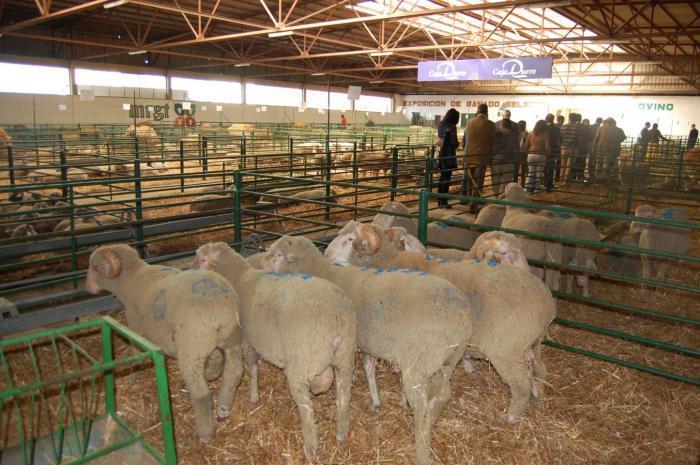 El Gobierno aprueba un Real Decreto para regular las declaraciones de entregas de leche de oveja y cabra