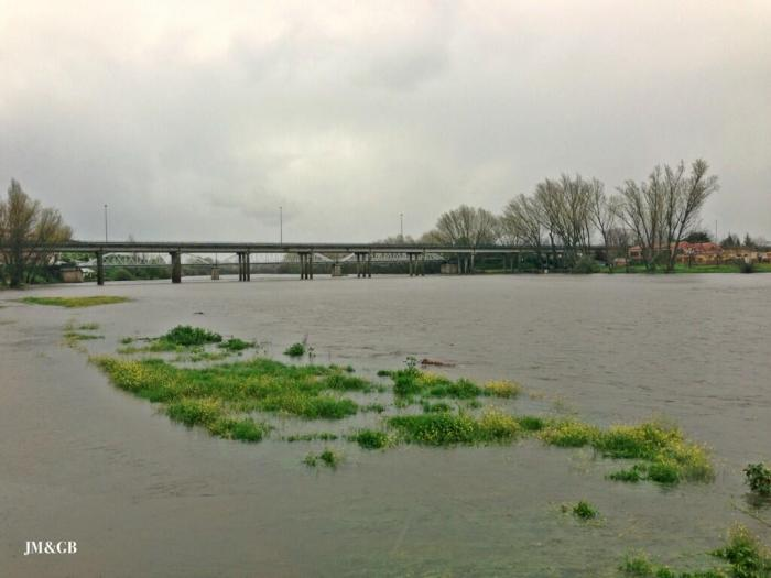 La crecida del río Alagón a su paso por Coria obliga a desalojar al Cirkus Kaos por riesgo de inundación