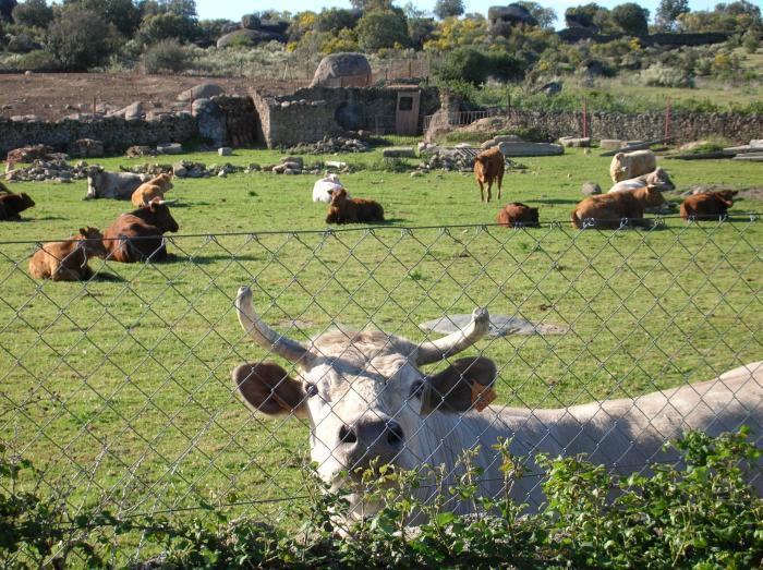 Moraleja cuenta desde hoy con  oficina veterinaria ubicada en la calle Ronda de los Molinos