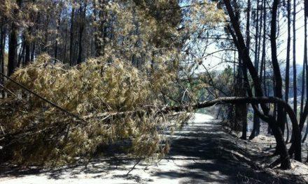 El incendio en la zona de Valverde del Fresno ha afectado a 32 hectáreas de restos de la corta de pinar