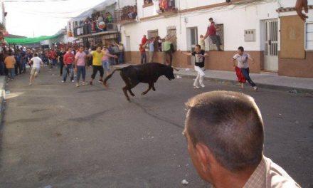 Moraleja festejará el Primero de Mayo con la suelta de dos vaquillas al estilo tradicional entre otras actividades