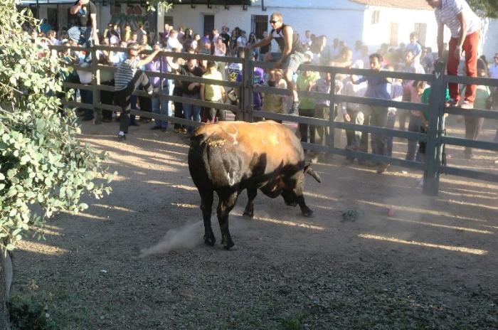 Vegaviana celebra el tradicional concurso de tractores y carrozas para festejar San Isidro