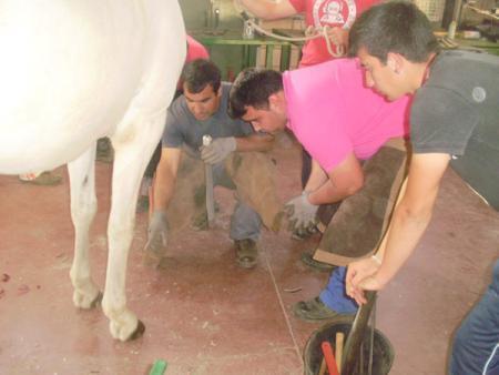 El Centro de Formación del Medio Rural de Moraleja enseñará las técnicas del herraje de caballos