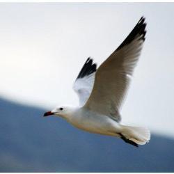 Valencia de Alcántara se unirá al proyecto Birdlife para impulsar el turismo ornitológico de la comarca