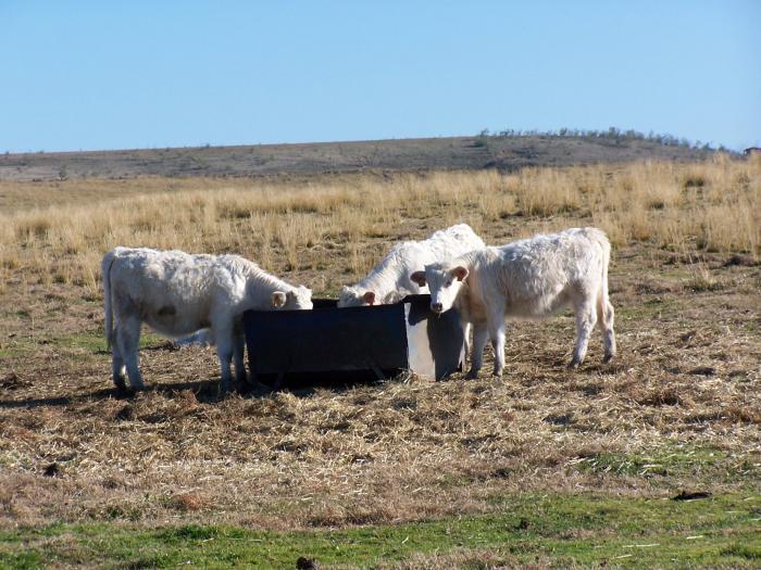 Nace la asociación Unión Ganadera 2008 para defender los intereses de los ganaderos extremeños