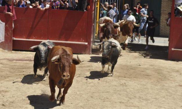 Los toros que se lidiarán en Moraleja durante las fiestas de San Buenaventura de este año no estarán despuntados
