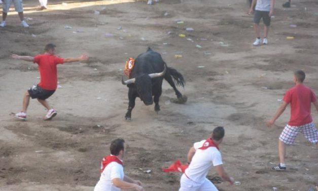 El astado Desgreñado, de la ganadería de Hato Blanco, abrirá el programa taurino de las fiestas de San Juan