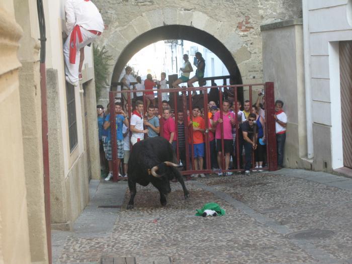 La lidia del toro de la Juventud Cauriense deja emoción en las calles de Coria y finaliza sin heridos