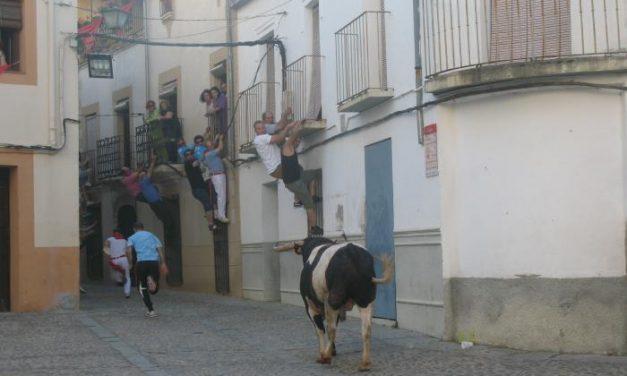 El toro de Sánchez Cobaleda hiere a dos aficionados en la lidia  y muere apuntillado en la Plaza de La Cava