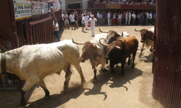 """El toro de la peña """"La Geta"""" finaliza el encierro más rápido de las fiestas de San Juan 2013"""