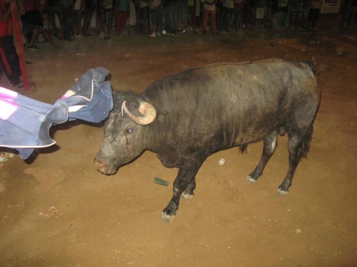 El encierro y lidia del último toro del aguardiente de San Buenaventura ha finalizado sin incidentes ni heridos