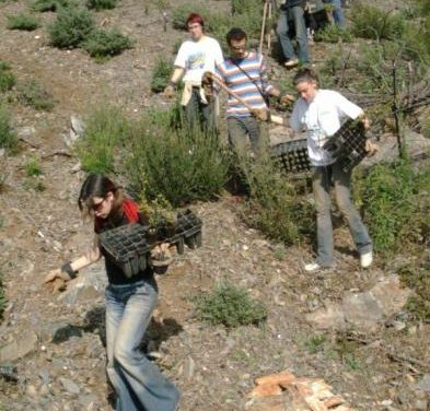 El Programa Plantabosques plantará alrededor de 6.000 árboles en la sierra portuguesa de San Mamede