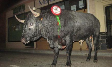"""El toro de la peña """"El Tarmazo"""" deja un herido de carácter grave con una cornada en la pierna"""