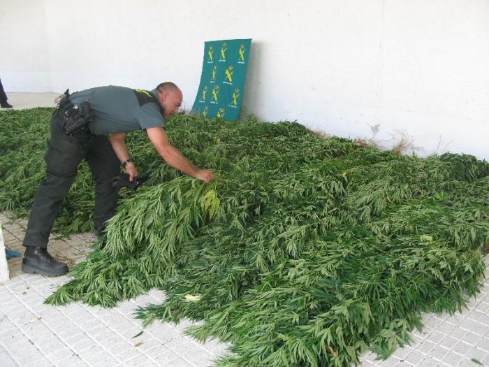 La Guardia Civil desmantela en Valencia de Alcántara una plantación con cerca de 300 plantas de mariahuana