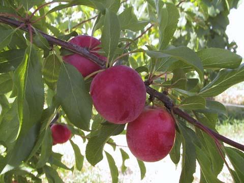 La Junta apoya a la agricultura ecológica con 200.000 euros en ayudas a los productores extremeños
