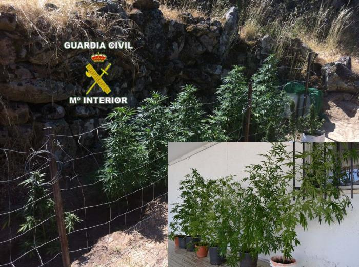 La Guardia Civil asesta un golpe al cultivo de marihuana en Valencia de Alcántara, Montanchez y la Vera
