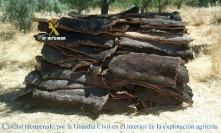 La Guardia Civil detiene a los integrantes de una banda dedicada al robo de corcho en  la Sierra de San Pedro