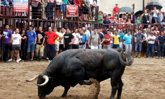 Las fiestas de agosto de Torrejoncillo arrancan este miércoles con el encierro de los bueyes a caballo