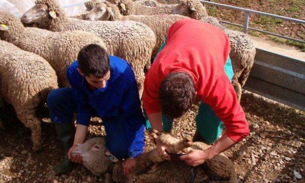 Casi 11.000 ganaderos extremeños realizan gestiones a través de la Oficina Veterinaria Virtual