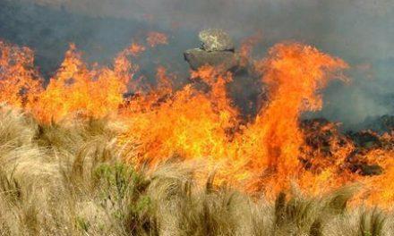 Efectivos del Plan INFOEX estabilizan el incendio de la Sierra de Santa Bárbara y desactivan el Nivel 1