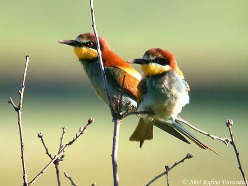 Extremadura adquiere protagonismo en las ferias de turismo ornitológico de Holanda y Suecia