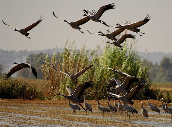 La oficina de turismo de Moraleja se integra en el Club del Producto Birding in Extremadura