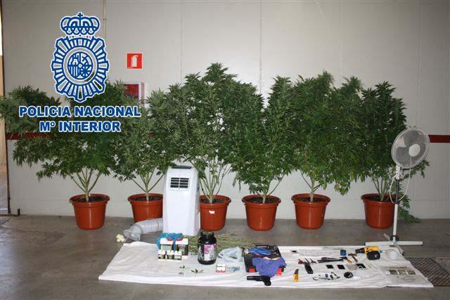 La Policía Nacional desmantela en tres días varias plantaciones de marihuana en la región