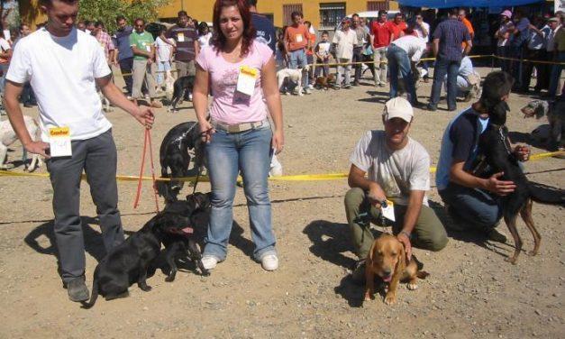 Ahigal celebrará este domingo la Feria Nacional del Perro y el Encuentro de Perros de Caza