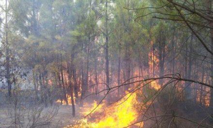Un nuevo incendio forestal afecta a un paraje próximo a la ermita de Espíritu Santo de Valverde del Fresno