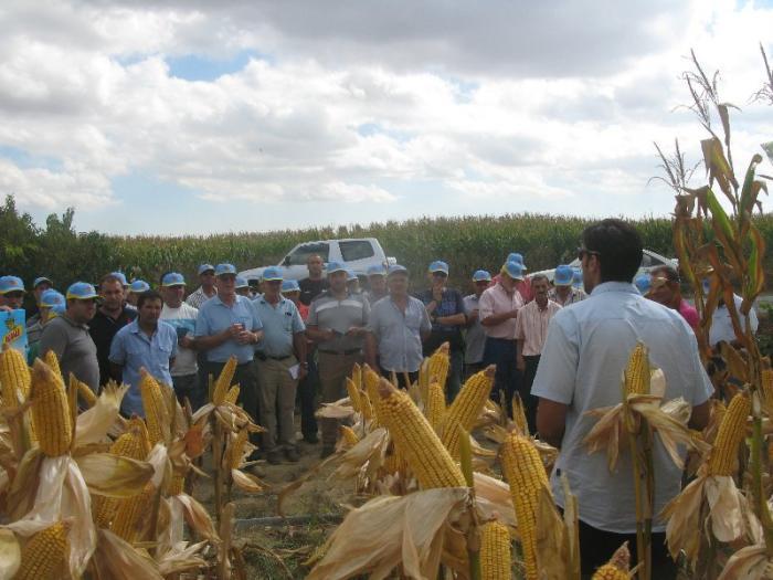 Más de cien agricultores del norte de Cáceres visitan un campo de ensayo con más de quince variedades de maíz