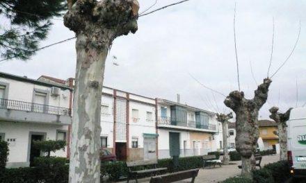 El Ayuntamiento de Moraleja manifiesta que es necesario hacer podas en los árboles ornamentales