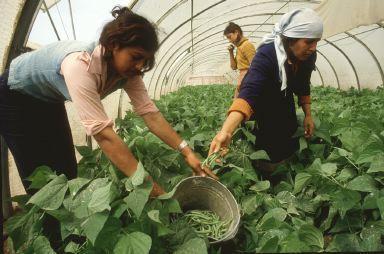 El Ministerio de Agricultura concede ayudas para la promoción de las mujeres del medio rural