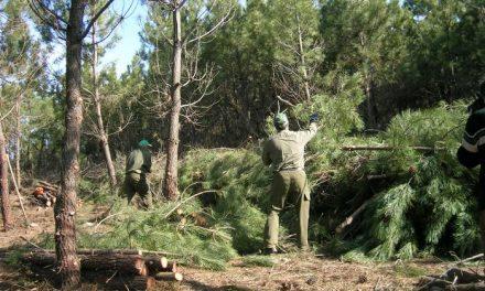 Cuatro municipios de Hurdes sacan a subasta pública el aprovechamiento de la madera por 633.800 €
