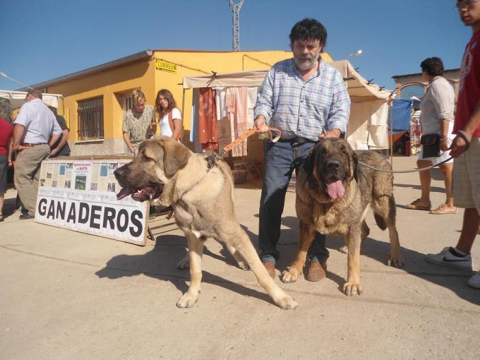 La Asociación Protectora de Animales de Moraleja organiza una jornada de vacunación de perros