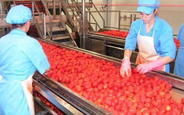 Agricultura firma un convenio de colaboración con la Mesa del Tomate para apoyar las producciones