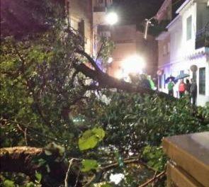 Las fuertes lluvias registradas en Moraleja provocan la caída de árboles y daños en varias naves