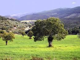 IU demanda al Gobierno regional que amplie las zonas protegidas y declare la Sierra de San Pedro parque natural