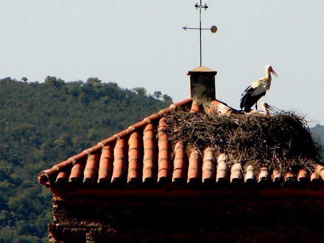 El consistorio de Moraleja valora positivamente el interés de los empresarios en las jornadas ornitológicas