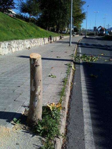 UPyD propone la creación de una ordenanza municipal para proteger y gestionar el arbolado de Plasencia