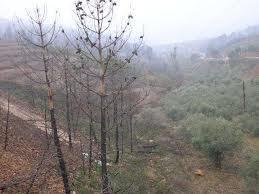 El Gobierno extremeño autoriza las obras preventivas de incendios forestales en la comarca de Las Hurdes