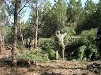 El Plan de Ordenación Forestal de Las Hurdes generará 42.000 peonadas hasta el año 2015