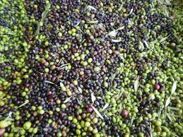 Echávarri insta a los agricultores iniciar la transformación de productos derivados del olivar