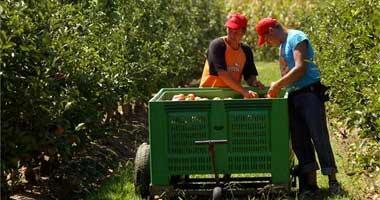 La falta de mano de obra agrícola en Extremadura obliga al sector de la fruta a solicitar mil inmigrantes