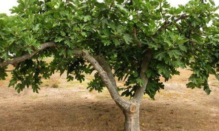 El Gobierno de Extremadura autoriza la investigación de sistemas de producción ecológica en Sierra de Gata