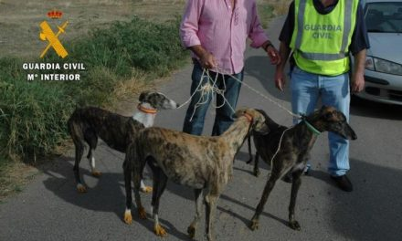 López Iglesias anuncia la detención de seis personas por el robo de 34 perros de raza galgo español