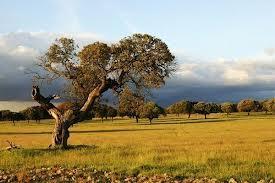 """La región extremeña tiene una calidad de aire """"muy buena"""", según el Informe Ambiental del año 2012"""
