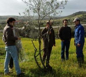 """El PP agradece el """"compromiso"""" del Gobierno regional ante el mal estado de los olivares de Ahigal"""