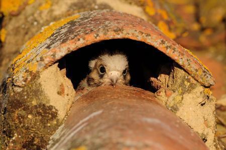 Cáceres, Plasencia y Trujillo acogen rutas ornitológicas este fin de semana como avance de FIO