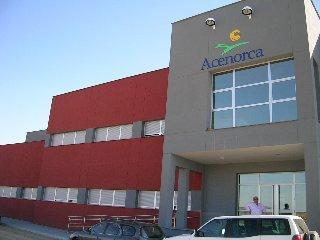 Acenorca construirá una nueva balsa de evaporación para el aderezo de aceitunas en Montehermoso